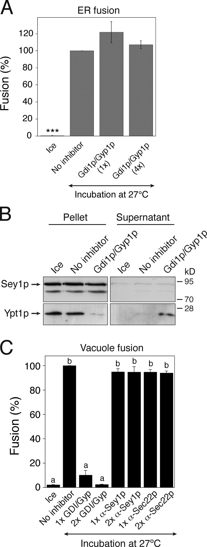 In vitro homotypic ER fusion is Rab independent. (A) Homotypic ER fusion is insensitive to Rab inhibition by Gdi1p/Gyp1p. Gluc1 and Gluc2 microsomes were incubated on ice or at 27°C with ATP/GTP in the absence or presence of his 6 -Gdi1p and his 6 -Gyp1p for 90 min. For 1×Gdi1p/Gyp1p, the concentrations of his 6 -Gdi1p and his 6 -Gyp1p were 1.5 and 2.5 µM, respectively; the corresponding concentrations for 4×Gdi1p/Gyp1p were 6 and 10 µM, respectively. Data represent the means ± SEM (error bars; n = 3). ***, P