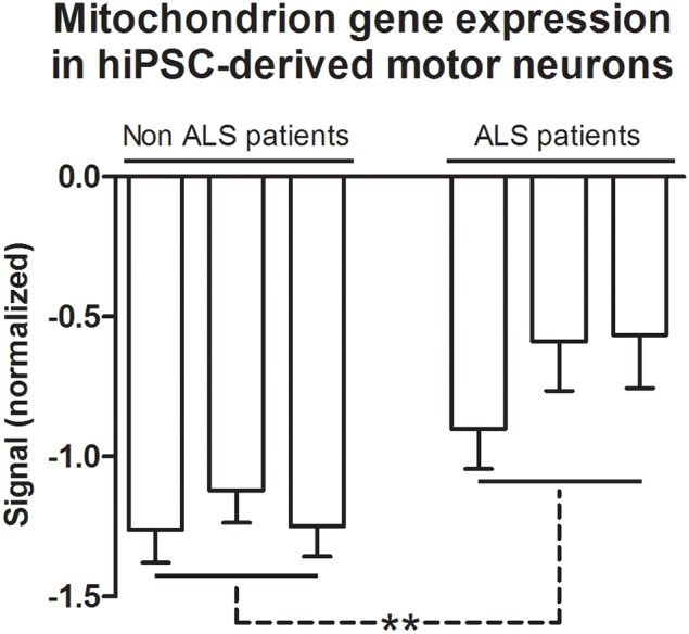 Mitochondrion gene expression in hiPSC-derived motor neurons . Gene expression normalized signals of 105 genes from GO terms of Cellular Components that are related to the mitochondrion. Bars represent the means ± SEM of the signals from three samples of differentiated motor neurons of non-ALS and ALS patients, as described in the text. The signal values (Cy5) were normalized by microarray reference (Cy3). The genes referred to GO terms mitochondrion (0005739), mitochondrial part (0044429), mitochondrial matrix (0005759), and mitochondrial lumen (0031980). See text and Table S4 for details. Differences within groups were analyzed by One-Way ANOVA followed by Tukey post-test, whereas differences between non-ALS and ALS groups were analyzed according to unpaired t -test ** p