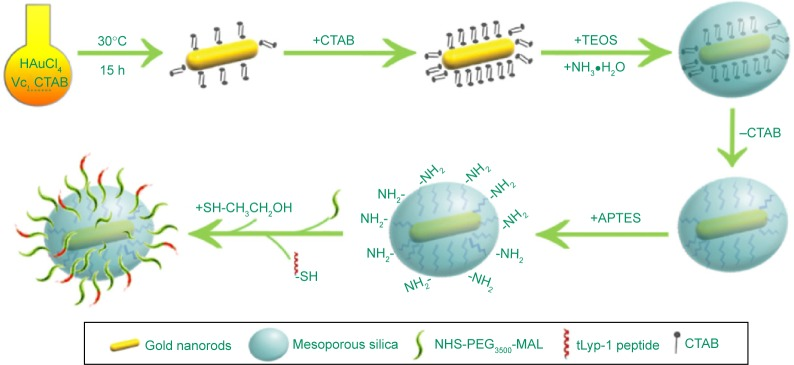 A schematic procedure for the preparation of TMSG nanoparticles. Abbreviations: TMSG, tLyp-1 peptide-functionalized and polyethylene glycol-modified mesoporous silica-coated gold nanorods; APTES, aminopropyl triethoxysilane; NHS-PEG 3500 -MAL maleimide PEG N-hydroxylsuccinimide ester; CTAB, cetyltrimethylammonium bromide; h, hours; TEOS, tetraethyl orthosilicate.