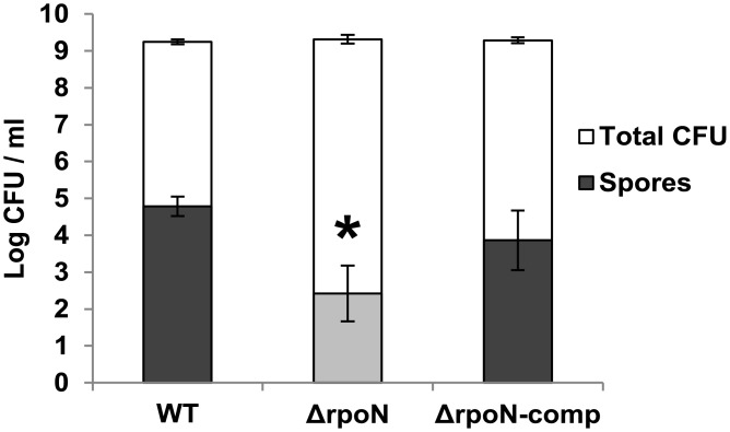 Spore formation. Number of spores and total viable counts in BHI formed by B . cereus ATCC 14579 WT, Δ rpoN and Δ rpoN -comp in BHI following aerated growth at 30°C for 48 h. The asterisk indicates significant difference (student's t test, p
