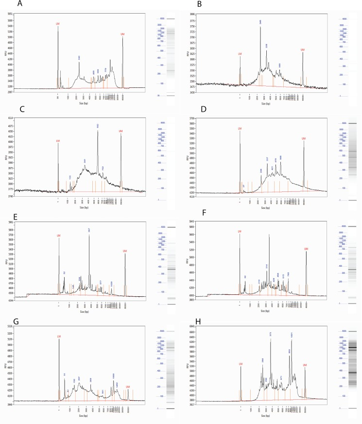 Analysis of the cDNA, digested cDNA, and RARseq libraries using Fragment Analyzer. (A) Double stranded cDNA, (B) MseI digested cDNA, (C) Styl digested cDNA, (D) MseI-Styl double digested cDNA, (E) MseI RARseq library, (F) MseI-Styl RARseq library, (G) Pool of MseI RARseq libraries, (H) Pool of MseI RARseq libraries after 1X SPRI cleaning.