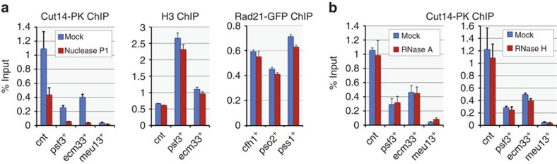 Presence of ssDNA at condensin binding sites. ( a ) Treatment of condensin-bound DNA fragments with nuclease P1, which is specific to ssDNA/single-stranded RNA. DNA fragments purified by Cut14-PK ChIP from prometaphase cells were treated with P1 on beads and then eluted and measured by qPCR (left). P1 sensitivity was specific to condensin-bound fragments, because bulk DNA at the same sites (purified by anti-histone H3 ChIP from prometaphase cells) or cohesin-associated DNA (purified by Rad21-GFP ChIP from asynchronous cells) showed no sensitivity (middle and right, respectively). ( b ) RNase treatment of condensin-bound DNA fragments. RNase A or RNase H treatment, which digests single-stranded RNA or RNA within DNA:RNA hybrids, respectively, caused no reduction in qPCR measurements, precluding the possibility that the condensin-DNA association is mediated by RNA. Error bars represent s.d. ( n =2, technical replicates in qPCR). cnt, central core regions of centromeres 1 and 3.