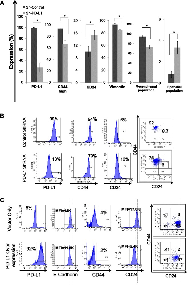Manipulation of PD-L1 modulates EMT status of breast cancer cells. EMT status determined by the expression of CD44, CD24, and vimentin or CD44/CD24 combination as measured by flow cytometry following PD-L1 knockdown using specific Sh-RNA mesenchymal-like (MDA-MB-231) breast cancer cells ( a b ). or PD-L1 overexpression by transfection with <t>PD-L1</t> ORF in the luminal-like (T47D) breast cancer cells ( c ). Bars in a represent the means of 3 three different clones and 3 different experiments ± standard deviation ( n = 9) while histograms in b c are representative of one of the experiments. Lines in each histograms represent threshold of positivity as determined by isotype control except of CD44 in MDA-MB-231 cells where it is an arbitrary line to show CD44 high status