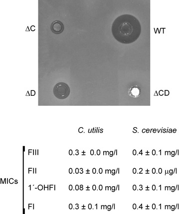 "Bioassay and MICs of filipin III and its intermediates. Bioassays were performed with ethyl acetate-extracted culture broths from early stationary phase-grown cells. C. utilis was used as test organism. MICs of the purified filipin derivatives for C. utilis and S. cerevisiae were measured by broth microdilution assay (see "" Methods ""). Abbreviations are as in Fig. 4 ."