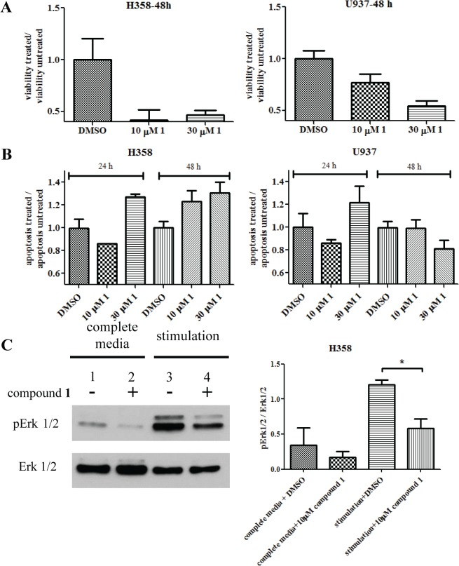 Effects of compound 1 on the Ras-dependent H358 cells. The U937 FPRΔST cell line was used as control since it had no known Ras-dependency. (A) Compound  1  decreased the viability of H358 cells at 48 h, compared to the control. (B) Apoptosis analysis showed increase response of H358 cells over time compared to control cells. (C) Treatment of compound  1  decreased the phosphorylation level of ERK 1/2 in H358 cells. (-) 0.1% DMSO treated controls; (+) 10 μM compound  1  treated samples. Cells were either grown in complete medium (lane 1 and 2) or stimulated after starvation (lane 3 and 4). The experiment was conducted three times. A representative immunoblot is shown. Immunoblots from all three experiments were quantified by densitometry using exposures in the linear range. The relative ratios of phospho Erk1/2 to total Erk1/2 are plotted.  p  = 0.0142, calculated with an unpaired two-tailed t-test using GraphPad Prism.
