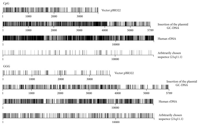 Distribution of CpG-motifs and Gn-motifs ( n = 3) within the model DNA samples and within rDNA (transcribed region of human ribosomal repeat) that accumulates in circulating DNA of blood plasma. The digits indicate the nucleotide order number, while the vertical bar shows the motif location. For comparison, the figure also presents the distribution of the motifs within a randomly chosen fragment of genomic DNA with a total GC-content of 42%.