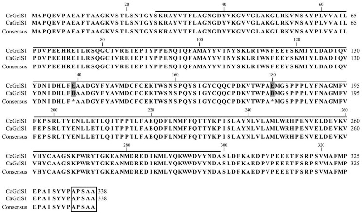 Alignment of galactinol synthase amino acid sequences from Coffea canephora (CcGolS1 – Contig 7664) and Coffea arabica (ADM92588.1 – CaGolS1). The alignment was done using CLC Main Workbench v.5.0 software, with ClustalW default parameters. Asterisks indicate differences in amino acid residues (shaded in grey) at positions 139 and 180. The conserved glycosyltransferase domain is indicated by a black line above the amino acids (reviewed by Zhou et al. , 2012 ) and the C-terminal hydrophobic pentapeptide APSAA is boxed.