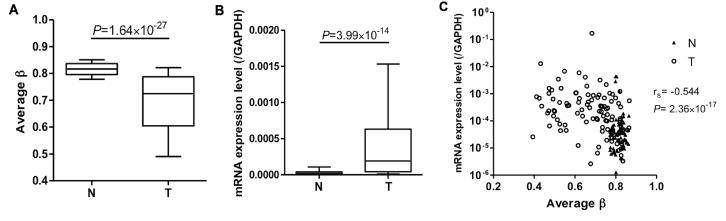 Correlation between <t>DNA</t> methylation and mRNA expression levels for PTPRH. DNA methylation (average values) (A) and mRNA expression levels (B) for PTPRH in samples of N and of T in LC-C2 were determined by the Infinium assay and <t>qRT-PCR</t> analysis, respectively. DNA methylation levels for PTPRH were significantly lower in T than in N samples and levels of PTPRH mRNA expression were significantly higher in T than in N samples. (C) Correlation of DNA methylation (average values) and mRNA expression levels for PTPRH in LC-C2 samples. PTPRH mRNA expression levels were inversely correlated with DNA methylation of the single CpG site. These results suggested that PTPRH DNA hypomethylation may result in increased mRNA expression in tissue samples from the same cohort. N, non-cancerous lung tissue; T, corresponding tumorous tissue; qRT-PCR, quantitative real-time reverse transcription-polymerase chain reaction.