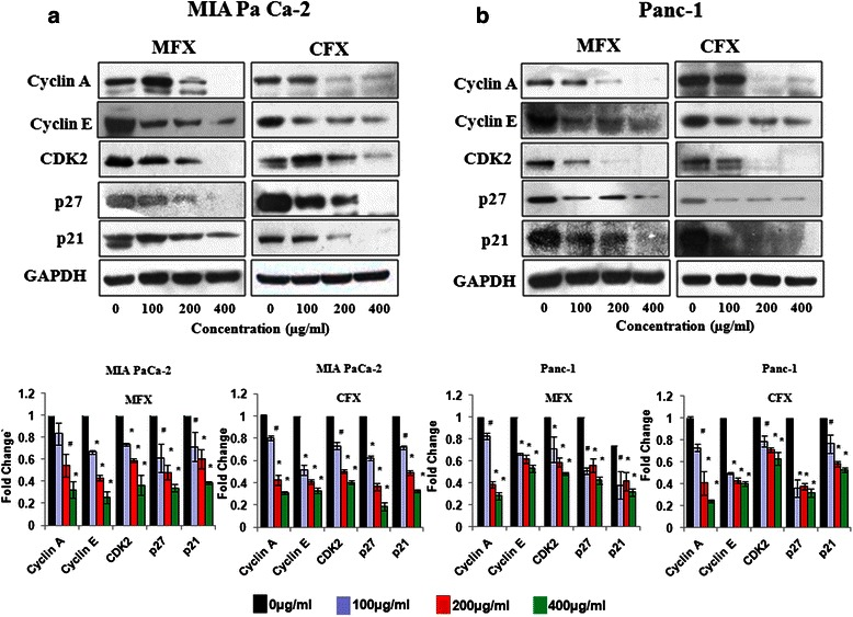 MFX and CFX effects S-phase associated regulatory proteins. Western blot analysis of S-phase regulatory Cyclins and CDKs in MIA PaCa-2 ( a ), and Panc-1 cells ( b ), treated with MFX and CFX in a dose dependent manner. GAPDH was used as loading control. The protein bands were quantified and normalized to GAPDH intensities. Data are representative of typical experiment repeated three times with similar results. Bar Graph represents the mean ± SEM of the fold change from three independent experiments. *p
