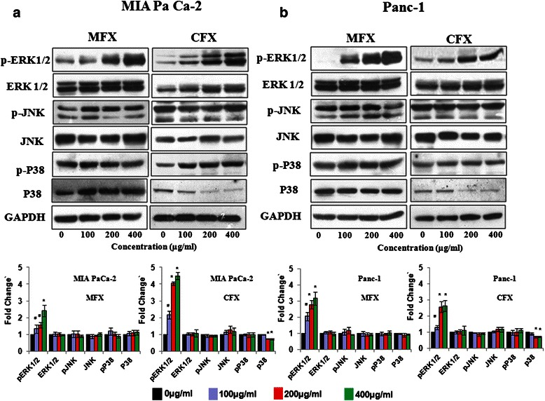 Effects of MFX and CFX on MAPK signalling pathway proteins Western blot analysis of MAPK pathway protein in MIA PaCa-2 ( a ), and panc-1 cells ( b ), treated with MFX and CFX in a dose dependent manner. GAPDH was used as loading control. The protein bands were quantified and normalized to GAPDH intensities. Data are representative of typical experiment repeated three times with similar results. Bar Graph represents the mean ± SEM of the fold change from three independent experiments. *p