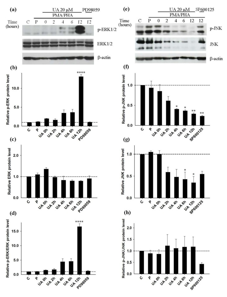 Inhibition of PMA/PHA induced-IL-2 and TNF-α production by ursolic acid via the JNK pathway; Western blot analysis (representative figure of three independent experiments). Cell were pre-incubated with UA for 0 to 12 hours, PD98059 or SP600125 for 12 hours prior to addition of PMA/PHA for a further 12 hours, or only DMSO (C) for 24 hours. For positive control (P) cells were left without treatment for 12 hours prior to addition of PMA/PHA for a further 12 hours. Protein expression of (a) p-ERK1/2 (42, 44 kDa), ERK1/2 (42, 44 kDa) and β-actin (45kDa) was detected by Western blot and normalized with β-actin. (b), (c), (d) Relative p-ERK, ERK and p-ERK/ERK protein level was calculated. Protein expression of (e) p-JNK (46, 54 kDa), JNK (46, 54 kDa) and β-actin (45kDa) was detected by Western blot and normalized with β-actin. (f), (g), (h) Relative p-JNK, JNK and p-JNK/JNK protein level was calculated. Statistical analysis was carried out with one-way ANOVA followed by Tukey's multiple comparison test compared with positive controls (PMA/PHA) (* P