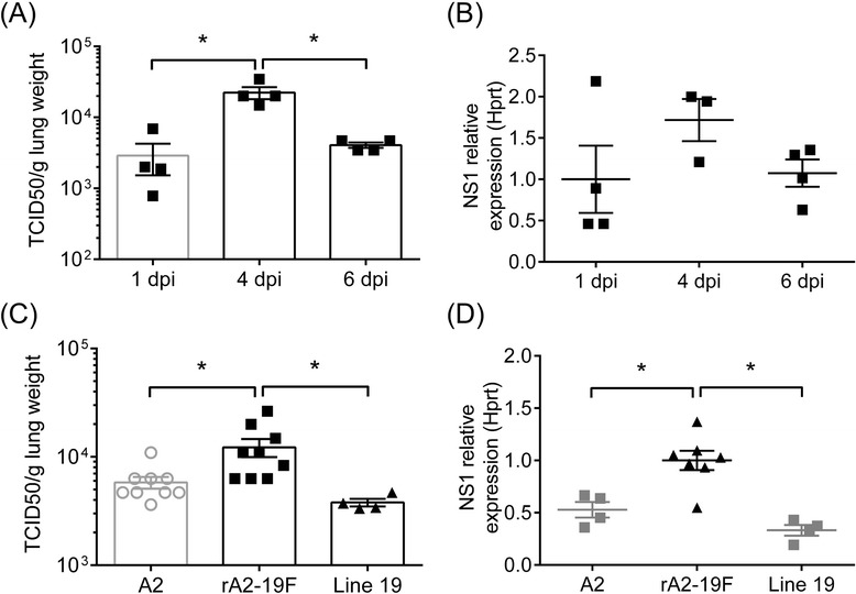 Pulmonary viral loads were elevated in the lungs of neonatal mice infected with rA2-19F. Lungs were isolated and viral load determined at various time points. a Viral load kinetics of rA2-19F infection determined by TCID 50 method. N = 4. b Viral load kinetics of rA2-19F infection determined by qPCR (relative expression of <t>RSV</t> NS1 gene). N = 3-4. c Viral load by TCID 50 assay at 4 dpi. N = 4-9. d Viral load by qPCR at 4 dpi. N = 4-7. A2: Neonates infected with A2 strain; rA2-19F: Neonates infected with rA2-19F. Line 19: Neonates infected with line 19. These figures are representative of 2 independent experiments. *: p