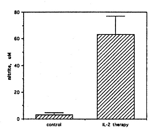 Induction of high output NO synthesis in Meth A ascites tumor cells by <t>IL-2</t> therapy. Meth A ascites cells harvested from three IL-2 treated mice were cultured at 1.5×10 5 cells/well in microtiter plates in triplicate. After a 48h culture, nitrite was measured in 50 μ l culture supernatants by a colorimetric assay. Results are mean±SD. Meth A ascites cells harvested from three untreated mice served as controls.