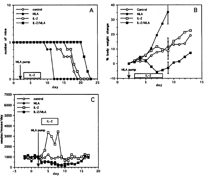 Evaluation of the role of IL-2 therapy-induced NO synthesis in the treatment of intraperitoneal Meth A tumor. Four groups of BALB/c mice bearing Meth A ascites tumor were treated (untreated control, MLA therapy only, IL-2 therapy only, and IL-2/MLA therapy). Survival (Panel A) and the rate of body weight increment (Panel B) (Bars express mean±SD, p