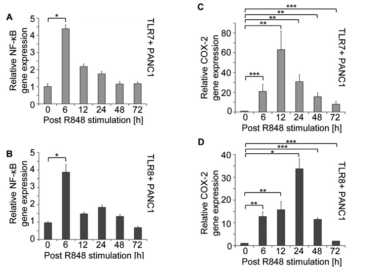 NF-κB and COX-2 gene expression in response to R848 stimulation of TLR7 + and TLR8 + PANC1 cells. (A and B) Stimulation of TLR7 + and TLR8 + PANC1 cells with R848 resulted in significantly increased gene expression levels of NF-κB ( * P