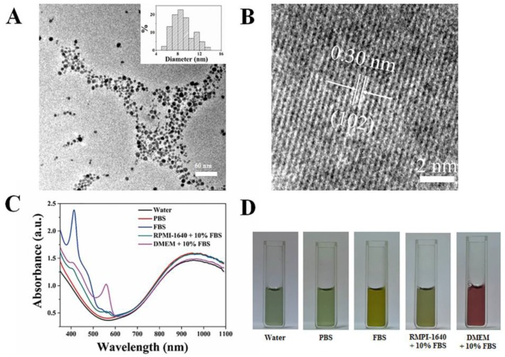 Characterization of <t>CuS@MPG</t> NPs: (A) TEM images and particle size distribution based on TEM results (Inset); (B) HRTEM images; (C) <t>UV-vis-NIR</t> spectra; (D) Photos of CuS@MPG NPs dispersed in water, PBS, fetal bovine serum (FBS), RMPI-1640 culture media containing 10% FBS and DMEM culture media containing 10% FBS.