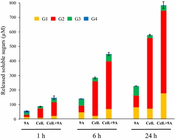 In vitro combination of Cel9A and purified cellulosomes on Avicel 3.5 g/L. 9A designates purified Cel9A (from E. coli ) at 10.5 mg/L. Cell. corresponds to purified cellulosomes from R. cellulolyticum carrying p0 by gel filtration at 10.5 mg/L. Cell. + 9A designates a mixture of 10.5 mg/L of Cel9A and 10.5 mg/L of purified cellulosomes. The soluble sugars released after 1, 6 and 24 h of incubation at 37°C (incubation time indicated at the bottom) were identified and quantified by HPAEC-PAD. G1, G2, G3 and G4 designate glucose, cellobiose, cellotriose and cellotetraose, respectively. The data show the mean of two independent experiments and the bars indicate the standard deviation.