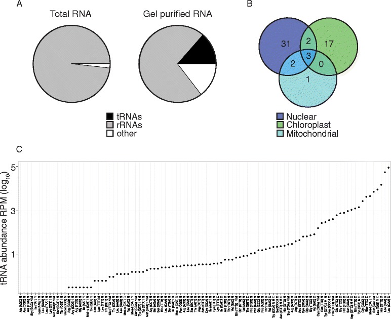 Efficient detection of Arabidopsis tRNAs by polyacrylamide gel purification and RNA-seq. a Comparison of Illumina sequencing reads from either total RNA or gel purified RNA shows an increase in reads mapping to tRNAs from 0.0007 to 13.58 %, respectively. Data from one representative biological replicate is shown. b Venn diagram showing detection of gel purified tRNA consensus sequences from nuclear, chloroplast and mitochondrial genomes. 56 out of 100 known tRNA consensus sequences were identified in our analysis. Overlapping circles indicate tRNAs that may originate from more than one genome ( n = 3 biological replicates). c Consensus tRNAs display a wide range of expression levels with chloroplast (C) encoded sequences showing the highest expression levels compared to nuclear (N) and mitochondrial (M) sequences (1 replicate). Three of the tRNAs have undetermined anticodon sequences and are shown as (XXX). Minority isodecoders with diverged sequences from the majority isodecoder are designated by the number 1 or 2 after the anticodon. RBS-seq was used for ( a ) and ( b ) and RNA-seq was used in ( c )