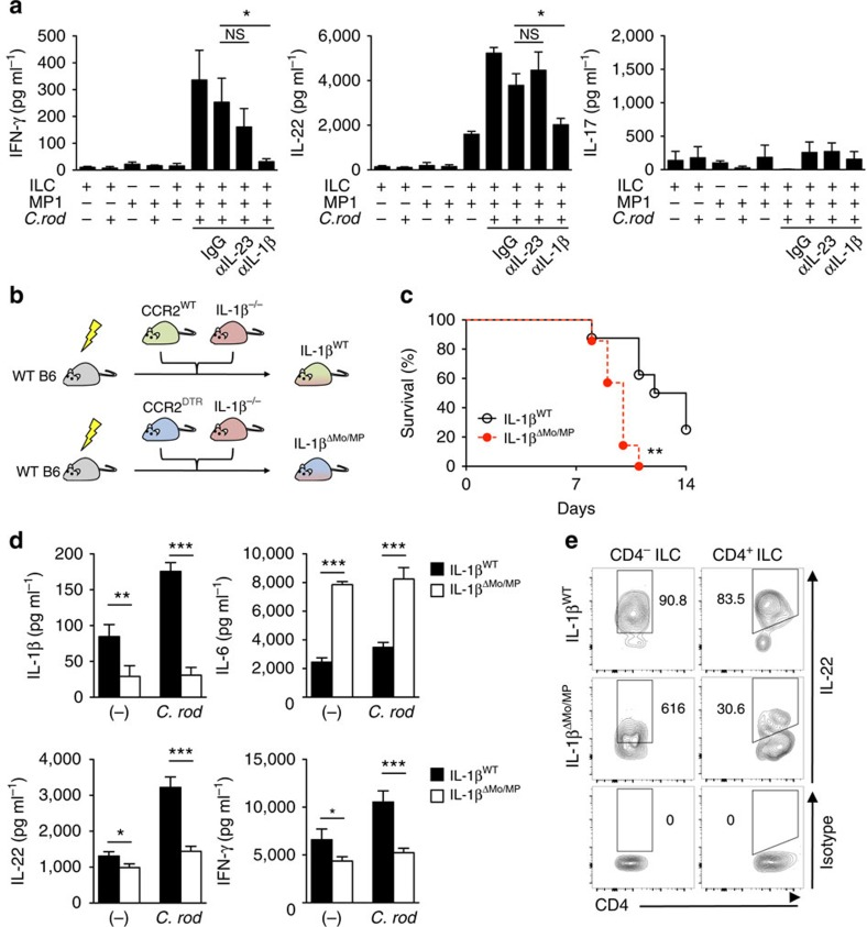 Activation of RORγt + ILCs requires IL-1β produced by monocyte-derived intestinal macrophages during C. rodentium ( C. rod ) infection. ( a ) CD3 - RORγt + ILCs from uninfected RORγt GFP/+ reporter mice and MP1 cells from C. rodentium -infected CD115 GFP were isolated. ILCs and MP1 cells (1 × 10 6 cells per ml) were cultured alone or co-cultured with or without stimulation with heat-killed C. rodentium (MOI=10) for 24 h. Neutralizing antibodies for IL-23 (10 μg ml −1 ), IL-1β (10 μg ml −1 ), or isotype controls were used to block cytokines. Data are given as mean±s.d. ( n =4). * P