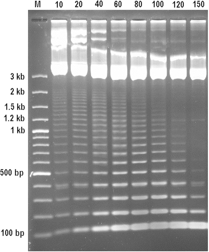 <t>Msc</t> I partial digestion of talC-Bam HI fragment cloned in pUC19. 2 μg plasmid <t>DNA</t> was digested with 5 u Msc I enzyme. The digestion times are given in minutes above the gel. M, 100 bp DNA ladder makers.
