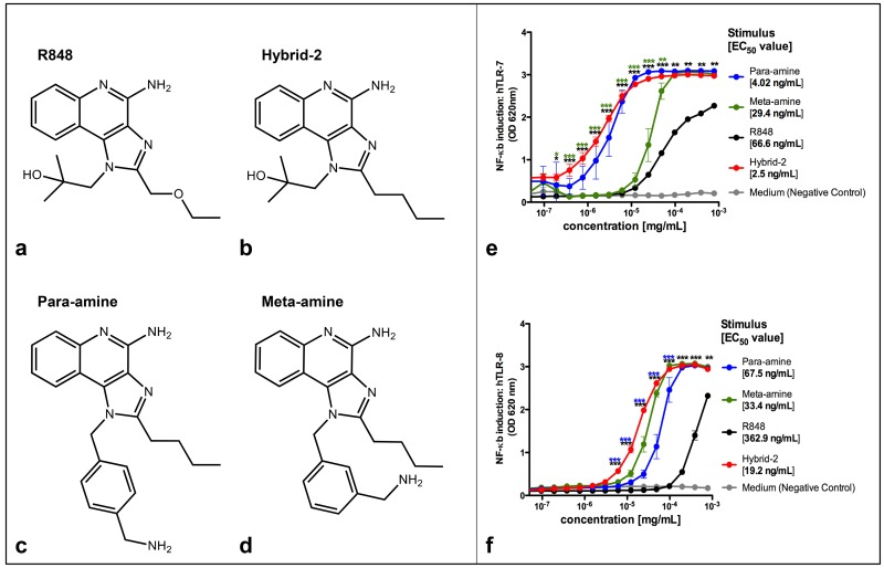 NF-κB induction by TLR7/8 agonists in HEK-TLR cells. Four TLR7/8 agonists were compared. (A) Structure of R848, (B) Structure of Hybrid-2, (C) Structure of para-amine and (D) Structure of meta-amine. HEK-293 cells transfected with (E) human TLR7 and (F) TLR8 and an NF-κB-driven reporter SEAP gene were stimulated for 18–24 h with TLR agonists. The y-axis shows the level of SEAP activity in the Quanti-blue assay optical density (OD). The x-axis shows the concentration of each compound in mg/ml. Each data point represents the mean ± SD of OD at 650 nm of triplicate culture wells. HEK detection medium alone (negative control) is represented in gray. The TLR7/8 benchmark agonist R848 is represented in black; The TLR 7/8 agonists Para-amine, Meta-amine and Hybrid-2 are represented in blue, green and red respectively. Three stars indicate significance of p