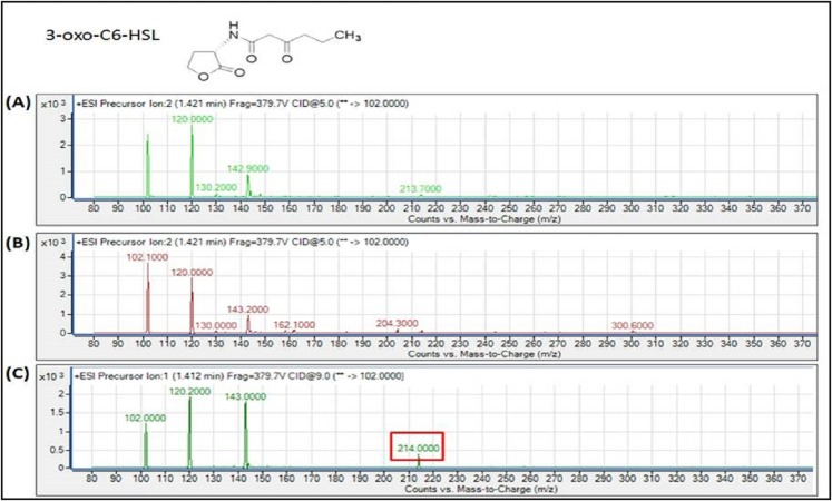 MS analyses of the extract of spent culture supernatant from IPTG-induced E. coli BL21 harboring pET28a- burI . By comparing with the corresponding synthetic AHL standard, the mass spectra demonstrated the presence of 3-oxo-C6-HSL at m / z 214.0000. (A) Mass spectra of E. coli BL21 harboring pET28a alone (control); (B) mass spectra of non-induced E. coli BL21 harboring pET28a- burI (control); (C) mass spectra of induced E. coli BL21 harboring pET28a- burI .