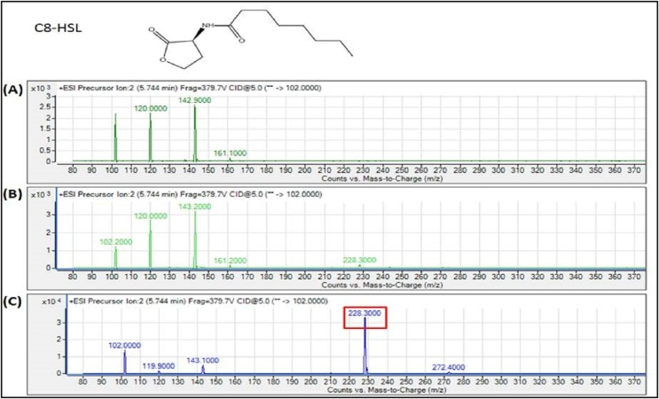 MS analyses of the extract of spent culture supernatant from IPTG-induced E. coli BL21 harboring pET28a- burI . By comparing with the corresponding synthetic AHL standard, the mass spectra demonstrated the presence of C8-HSL at m / z 228.3000. (A) Mass spectra of E. coli BL21 harboring pET28a alone (control); (B) mass spectra of non-induced E. coli BL21 harboring pET28a- burI (control); (C) mass spectra of induced E. coli BL21 harboring pET28a- burI .