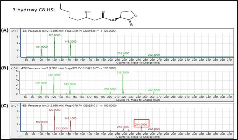 MS analyses of the extract of spent culture supernatant from IPTG-induced E. coli BL21 harboring pET28a- burI . By comparing with the corresponding synthetic AHL standard, the mass spectra demonstrated the presence of 3-hydroxy-C8-HSL at m / z 244.0000. (A) Mass spectra of E. coli BL21 harboring pET28a alone (control); (B) mass spectra of non-induced E. coli BL21 harboring pET28a- burI (control); (C) mass spectra of induced E. coli BL21 harboring pET28a- burI .