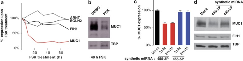 MUC1 is a bona fide target of miR455-3P in BeWo cells. ( a ) Expression of potential miR455 target mRNAs in FSK-treated BeWo cells. Expression of the indicated potential miR455 target mRNAs was analyzed by <t>qRT-PCR.</t> Values were normalized to RPLP0 and displayed relative to DMSO-treated cells. ( b ) MUC1 protein levels are reduced by FSK treatment. MUC1 and TBP protein levels were analyzed by western blotting 48 h after treatment. ( c and d ) MUC1 is repressed by miR455-3P but not miR455-5P. BeWo cells were transfected with synthetic miRNAs at two concentrations (5 and 20 nM). <t>RNA</t> and protein samples were harvested 48 h post-transfection. MUC1 mRNA and protein levels were determined by qRT-PCR ( c ) and western blotting ( d ), respectively. One western blot representative of a transfection with 20 nM synthetic miRNA is presented in d . TBP served as a loading control