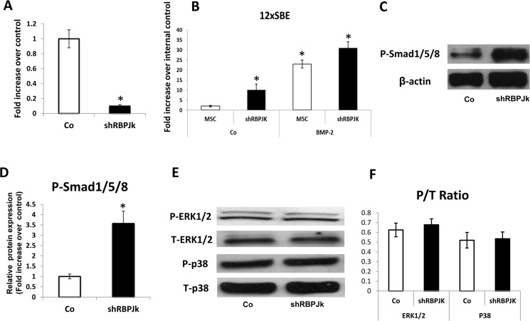 Enhanced BMP signaling in RBPJK deficient MSCs. (A) Real time RT-PCR analysis reveals that expression of RBPJK was significantly inhibited by 90% in shRBPJK lentivirus infected MSCs (shRBPJK) at day 2 when compared to shRNA-lentivirus control MSCs (Co). (B) Luciferase assays showed a significant increase of BMP responsive reporter activity in shRBPJK MSCs and this transcriptional up-regulation is further enhanced by BMP-2 treatment. Data are means ± s.d. of three independent experiments performed in duplicate and all the results were normalized to internal control (*, p