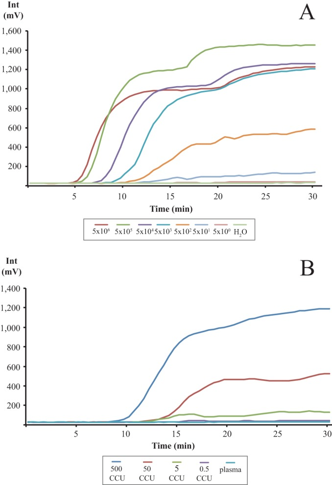 Graph depicting the RPA amplification (development of fluorescence, mV) over time (minutes). (A) M. capricolum subsp. capripneumoniae DNA (5 × 10 6 to 5 × 10 0 copies/reaction) diluted in nuclease-free water. (B) M. capricolum subsp. capripneumoniae CCU (500 to 0.5 CCU/reaction) spiked in plasma from a healthy goat. Each graph represents the mean value from eight individual runs.