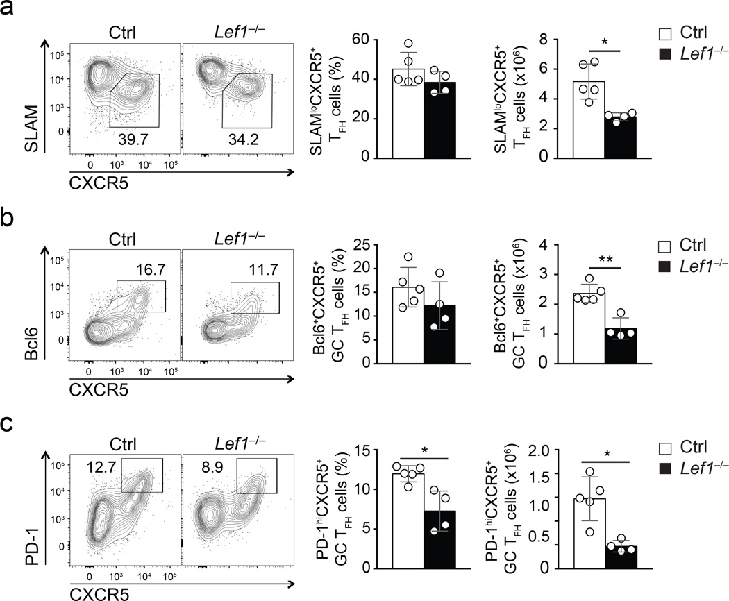Genetic ablation of LEF-1 impairs GC T FH  differentiation ( a-c ) Flow cytometry of T FH  and GC T FH  cells in spleens of  Lef1 −/−  mice and littermate controls infecte d w ith vaccinia virus for 8 days. Plots are gated on CD44 hi CD62L lo GFP + CD4 +  T cells.  (a)  SLAM lo CXCR5 +  T FH  cells. ( b-c ) Abundance of GC T FH  cells phenotyped as Bcl6 + CXCR5 +  ( b ) and PD-1 hi CXCR5 + (c) . Cumulative data from four independent experiments are shown (mean ± s.d.). *  P