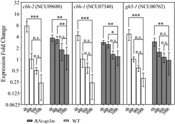Maintenance of high lignocellulase gene expression levels in Δ Ncap3m relative to the wild-type strain (WT) at the late fermentation stage. After Δ Ncap3m and WT conidia were grown on Avicel for 4, 48, 96, or 168 h, the transcriptional abundance of three major lignocellulase genes was evaluated by quantitative real-time PCR (qPCR). The data are normalized to the expression of the WT strain at 48 h for each tested gene, with actin (NCU04173) gene expression levels used as an endogenous control in all samples (standard error of the mean, n = 3). Asterisks indicate significant differences from the control (* P