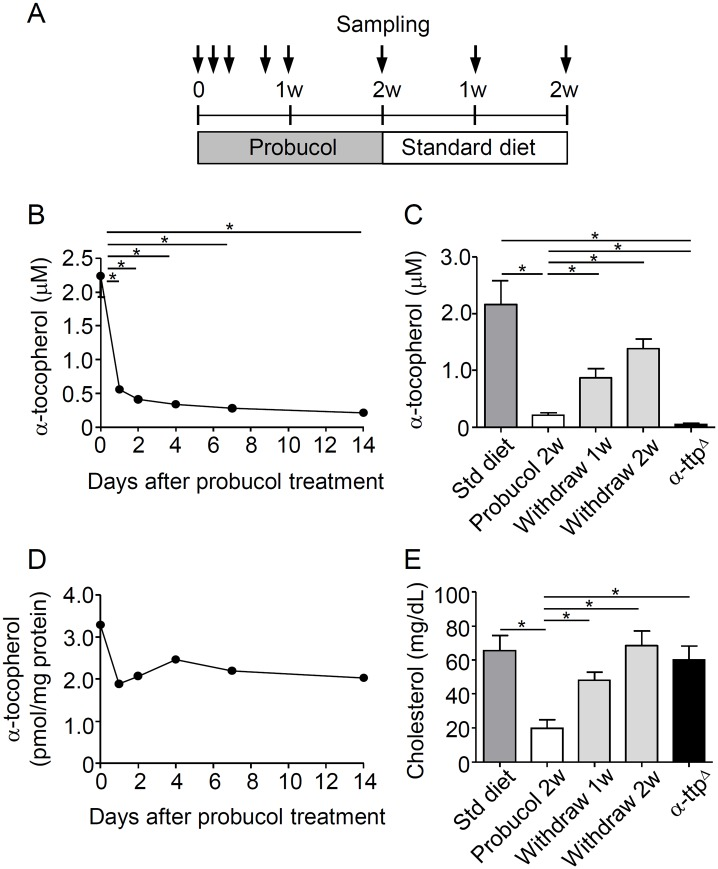 Plasma concentrations of <t>α-tocopherol</t> and cholesterol decreased after probucol treatment. A, Experimental design for α-tocopherol deficiency induction using 1% w/w probucol in the diet. Six-week-old C57BL/6J mice were treated with 1% w/w probucol for 2 weeks. Then, mice were withdrawn from the probucol diet and changed to a standard diet for 2 weeks. Plasma and erythrocyte samples were obtained at day 0, 1, 2, 4, 7, and 14 after starting probucol treatment (n = 5 per group) and 1 or 2 weeks post-withdrawal (n = 3 per group). In addition, the plasma of eight-week-old α-tocopherol transfer protein knockout (α-ttp Δ ) mice fed a standard diet was obtained (n = 3). Plasma α-tocopherol concentrations were measured after probucol treatment (B) and after withdrawal (C). The levels of α-tocopherol in erythrocytes were normalized with the protein concentration (n = 5 per group) (D). Plasma cholesterol concentrations were measured by using the cholesterol E-test after 2 weeks of probucol treatment and after withdrawal (n = 3) (E). All data are expressed as mean ± SE. Statistical analysis was carried out by analysis of variance (ANOVA; multiple comparisons Tukey's test). *p