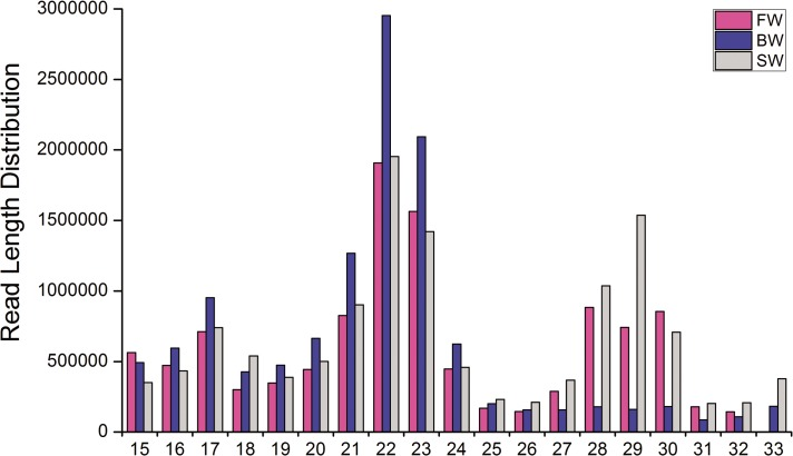 Length distribution of sRNA sequences of A . marmorata in three libraries. Sequence length distribution of clean reads based on the abundance; the most abundant size class was 22 nt in three libraries, followed by 23 nt in FW and BW but 29 nt in SW.