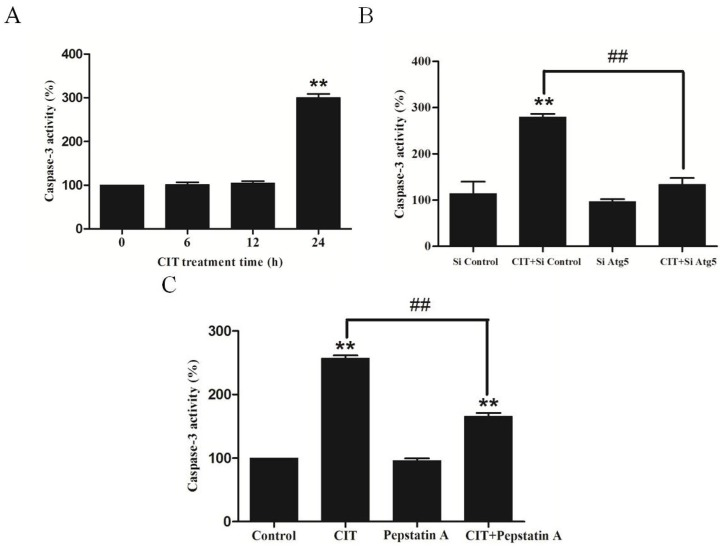CIT induced autophagy-dependent apoptosis in HepG2 cells. Caspase-3 activity was determined using colorimetric method and was expressed as a percent of control activity. ( A ) HepG2 cells were treated with 5 µM CIT for 6 h, 12 h, or 24 h. ( B ) HepG2 cells were transfected with either 50 nM siRNA against human Atg5 (Si Atg5) or scrambled control siRNA (Si Control), and then treated with 5 µM CIT for 24 h. ( C ) HepG2 cells were pretreated with 40 µM <t>pepstatin</t> A for 4 h, and subsequently treated with 5 µM CIT for 24 h. ** p
