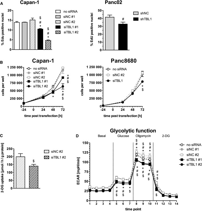 TBL1 controls pancreatic cancer cell growth and metabolic adaptations Left panel: EdU incorporation in siRNA-transfected Capan-1 cells (72 h post-transfection), n = 6 cell culture wells per group; significantly different ( P