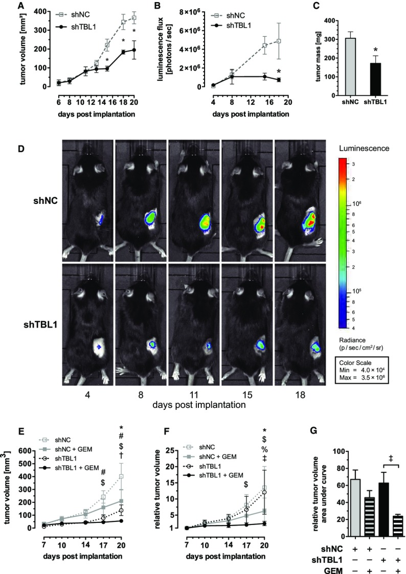 TBL1 reverses and prevents tumor growth in vivo and sensitizes toward chemotherapy A–D Panc02 cells with stable expression of luciferase were implanted subcutaneously into C57Bl6/N mice. Six days later, tumors were injected three times per week with 10 8 ifu of adenovirus encoding shRNA. (A–C): Data plotted as mean ± SEM; n = 4 animals in control (shNC) group and n = 3 animals in knockdown (shTBL1) group; significantly different ( P