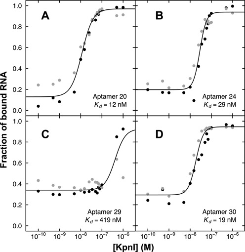 Quantitation of KpnI binding affinity by electrophoretic gel mobility shift assay for ( A ) aptamer 20; ( B ) aptamer 24; ( C ) aptamer 29; and ( D ) aptamer 30. Replicate data are shown as black and gray points.
