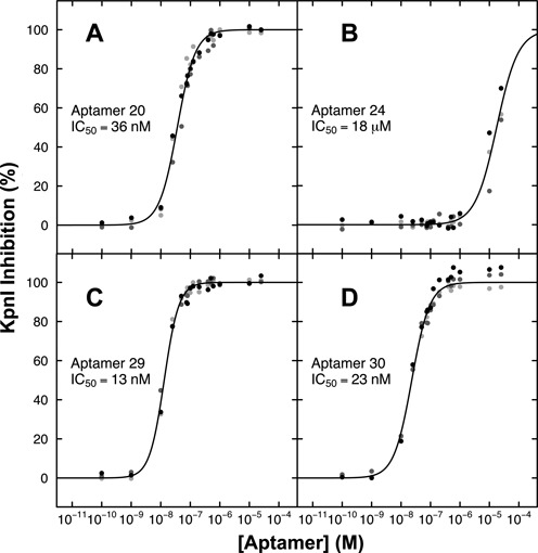 KpnI inhibition by anti-KpnI RNA aptamers. KpnI in the presence of 20 nM fluorescent DNA probe was incubated with anti-KpnI aptamers in the concentration range 10 pM–100 μM. ( A ) Aptamer 20; ( B ) aptamer 24; ( C ) aptamer 29; ( D ) aptamer 30.