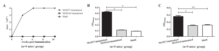 BALB/c mice immunized with MAP27 produced anti-MAP27, anti-PGN and anti- S . aureus antibodies. (A) Titers of anti-MAP27 serum during the period of immunization. 96-well plates were coated with MAP27. Serum samples from mice immunized with MAP27, MAPctrl or blank were pooled and added in a 10-fold serial dilution, followed by incubation with HRP-conjunctive goat anti-mouse IgG. (B) Sera from MAP27-immunized mice bind to PGN after the fifth MAP immunization. (C) Sera from MAP27-immunized mice bind to S . aureus after boosting with heat-killed S . aureus . For ELISA assays in panel B and C, 96-well plates were coated with PGN or sonicated S . aureus fragments. Serum samples were added in a 1/200 dilution as primary antibodies, followed by incubation with HRP-conjunctive goat anti-mouse IgG. The absorbance was measured at OD 450nm . The results are presented as means ±SEM. * P