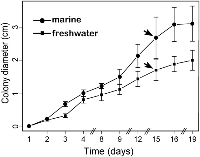 Graphical representation of C. maritima growth under two salinity conditions (bars represent SD). The growth in freshwater is represented by filled squares, whereas the marine growth is represented as the solid circles. Statistical significance between the curves was assessed using a permutation test to compare growth curves. The test was applied to the colony diameter until effects on the growth were most apparent, that is, 16–19 d after inoculation. The pair-wise comparisons between the fungi samples were statistically nonsignificant ( P -value 0.0999). The arrows indicate the time of growth from where the <t>RNA</t> isolation was performed for either the <t>transcriptome</t> or the RT-qPCR analysis.