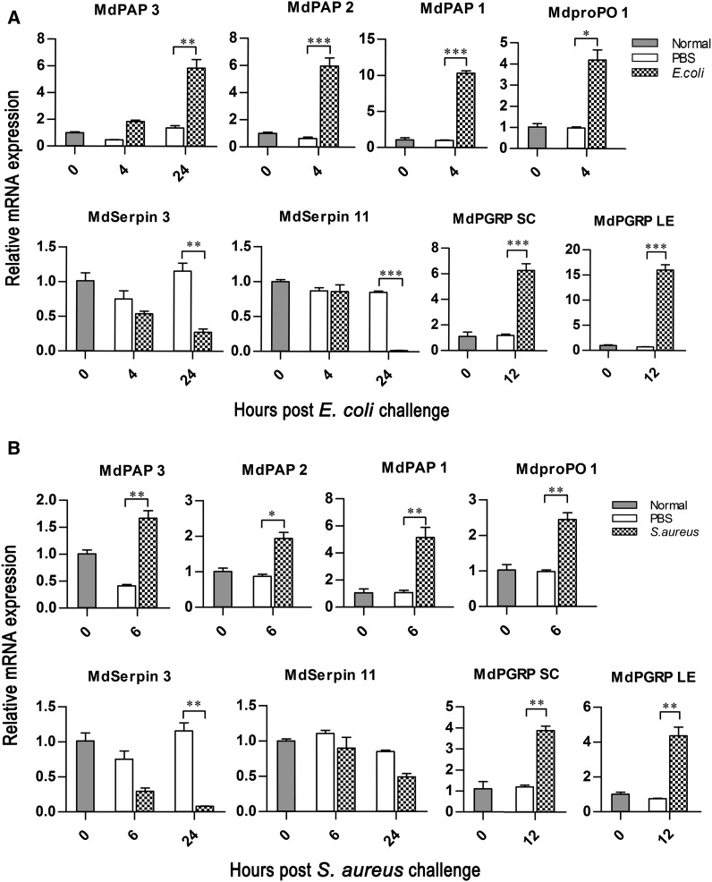 Expression profiles of candidate genes. The expression profiles of selected genes were detected by qRT-PCR using the third instar larvae at different time intervals (0, 2, 4, 6, 12, 24 hr) after challenge by E. coli (A) or S. aureus (B), in which actin acted as the quantity and quality control to normalize interest gene expression level. The error bars represent the mean ± SD of three repeat amplifications. The asterisks represent significant differences from the control (unpaired t -test, *** P