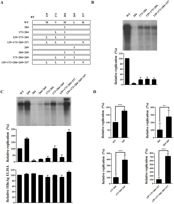 rtL269I substitution enhances the replication of both WT and drug-resistant hepatitis B virus (HBV). (A) Schematic diagram of each HBV mutant construct used in this study. (B–C) Effect of mutations at positions 204, 173, 129, 337, and 269 on HBV DNA replication. Huh7 cells cultured in six-well plates were transfected with HBV plasmids. HBV DNA levels were analyzed by Southern blotting. HBeAg in culture supernatant was determined by ELISA. (D) Phosphor-imager analysis of the relative replication capacities of the HBV mutants. The standard deviation from three independent experiments was calculated (**, P