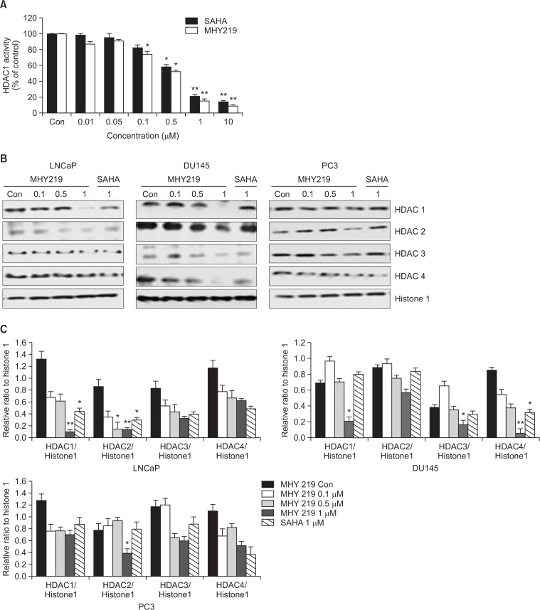 Effect of MHY219 and SAHA on histone deacetylase (HDAC) 1 activity and expression levels of HDACs in prostate cancer cells. (A) Histone deacetylase 1 <t>(HDAC1)</t> enzyme activity was measured by using a fluorometric HDAC activity assay kit. This result represents the percentage of activity compared to control cells in each group, respectively. Results are expressed as mean ± standard error of the mean (S.E.M.) of three independent experiments. * p