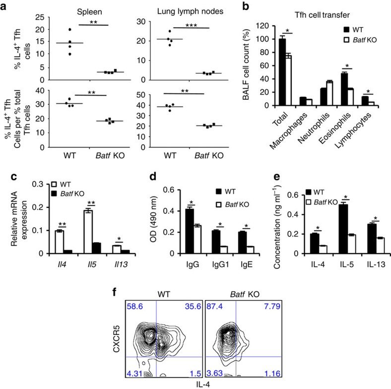 Batf contributes to pro-allergic function of IL-4-expressing Tfh cells. ( a ) Male WT and Batf KO mice (6–8 weeks old, n =5 per group) were injected i.p. with 0.2 ml saline containing 100 μg Ova in Alum at 2 weeks interval. On day 14, mice were intranasally challenged with Ova followed by three more challenges at days 26, 27 and 28. Twenty-four hours after the last challenge mice were killed. Percentage of IL-4-expressing CD4 + CD44 hi CXCR5 hi PD1 hi (Tfh) cells and ratio of percentage of IL-4-expressing Tfh cells to percentage of total Tfh cells from spleen and lung lymph nodes of WT and Batf KO asthmatic mice were analysed by flow cytometry. ( b – f ) Bone marrow chimera mice were generated and subjected to asthma as described in the Methods section. WT (CD45.1 + ) and Batf KO (CD45.2 + ) Tfh cells from the asthmatic mice were sorted and transferred into male C57BL/6 (CD45.2 + ) or B6.SJL (CD45.1 + ; 6–8 weeks old, n =4) mice, respectively. Twenty-four hours later the mice were challenged with Ova intranasally for 5 days and analysed. ( b ) BALF was analysed to measure airway infiltrating cells. ( c ) Expression of indicated cytokines in the lung was analysed by qRT–PCR analysis. Data were normalized to beta-actin gene. ( d ) Levels of Ova-specific IgGs in the serum were analysed by ELISA. ( e ) Spleen cells from the recipient mice were restimulated with Ova for 72 h and effector Th2 cytokines were analysed by ELISA. ( f ) Lung and lung lymph node cells were stained with Pacific blue-labelled CD45.1 mAb, PerCP-labelled anti-CD4 mAb, FITC-labelled anti-CD44 mAb and biotinylated anti-CXCR5 mAb, followed by APC-labelled streptavidin (BD Biosciences). Donor WT (CD45.1 + ) and Batf KO (CD45.2 + ) CD4 + CD44 hi cells were assessed for CXRCR5 and IL-4 expression after restimulation with Ova for 24 h. Results shown are mean±s.e.m. and representative of at least two independent experiments. P values: *