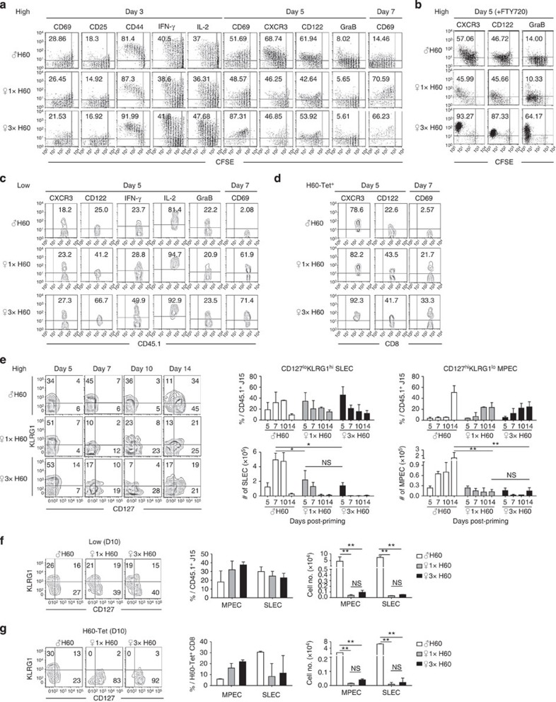 Effector differentiation between helper-deficient cells and helped cells. ( a – c ) Phenotypic profiles of CD45.1 + J15 CD8 + T cells in the spleens of adoptive hosts transferred in high numbers ( a ), treated with FTY-720 ( b ) or transferred in low numbers ( c ). ( d ) Phenotypic profiles of polyclonal H60-tetramer-binding CD8 + T cells. ( e–g ) Representative flow cytometry data and plots of the proportion and numbers of short-lived effector cell (SLEC) and memory precursor effector cell (MPEC) populations ( e , f ) in J15 CD8 + T cells from adoptive hosts transferred with high ( e ) or low ( f ) numbers of cells, or ( g ) in polyclonal H60-tetramer-binding CD8 + T cells. Data represent three ( a , b , e ) or two ( c , d , f , g ) independent experiments ( n =2 per group per experiment). Data are presented as means±s.e.m. Not Significant (NS) P > 0.05, * P