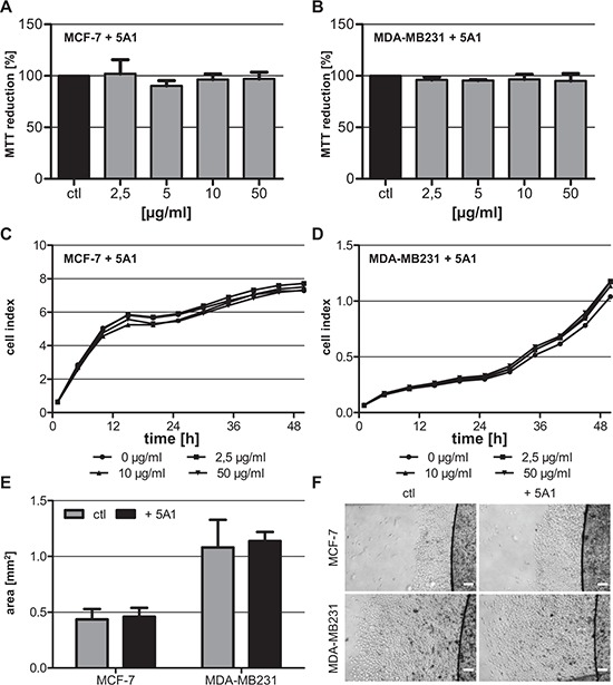 Anti-CSF-1 antibody 5A1 does not exert cytotoxic effects on tested breast cancer cells A, B. Metabolic activity of MCF-7 (A) and MDA-MB231 (B) was analyzed 96 h after treatment with 5A1 by measuring MTT reduction (mean ± SD, n ≥ 6). C, D. MCF-7 (C) and MDA-MB231 (D) were treated with 0 μg/ml (circle), 2.5 μg/ml (square), 10 μg/ml (triangle) and 50 μg/ml (inverse triangle) 5A1. Cell proliferation was measured over 48 h using the xCELLigence system and is indicated as cell index. E, F. ECM-based migration assays for MCF-7 and MDA-MB231 over 48 h in the absence (gray bars, left pictures) and presence (black bars, right pictures) of 25 μg/ml 5A1 (mean ± SD, n = 4). Scale bars indicate 200 μm.