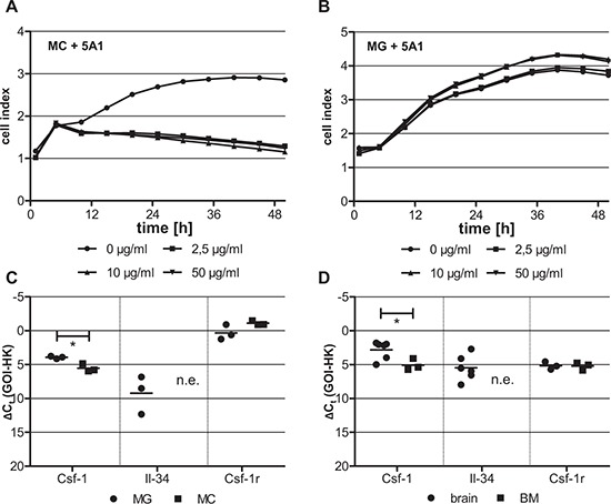 Differing cytotoxicity of 5A1 on distinct macrophage populations is correlated with differing growth factor expression MC A. and MG B. were treated with 0 μg/ml (circle), 2.5 μg/ml (square), 10 μg/ml (triangle) and 50 μg/ml (inverse triangle) 5A1. Cell proliferation was measured over 48 h using the xCELLigence system and is indicated as cell index. Shown is one representative result ( n = 3). C, D. qRT-PCR for CSF-1, IL-34 and its receptor CSF-1R in (C) MG (circle) and MC (square) and (D) the respective tissue of origin of these two macrophage populations, i.e. brain (circle) and bone marrow (BM, square) (GOI = gene of interest, HK = housekeeper, n.e. = not expressed, * P