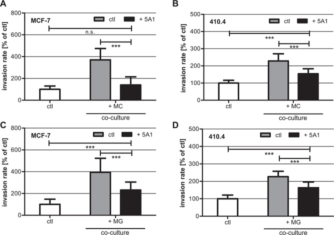 5A1 decreases MG- and MC-induced invasiveness of MCF-7 and 410.4 cells Microinvasion assay of tumor cells alone (white bars) and in co-culture with MC A, B. or MG C, D. in the absence (gray bars) or presence (black bars) of 2.5 μg/ml 5A1. MC- and MG-induced invasiveness of both MCF-7 (A), (C) and 410.4 (B), (D) is significantly decreased by 5A1. However MG-induced invasion is blocked by 5A1 to a lower extent. Invasiveness is indicated as the percentage of the control tumor cells alone (mean ± SD, n ≥ 4, * P